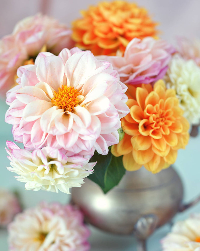 Paint By Numbers  - Darling Dahlia