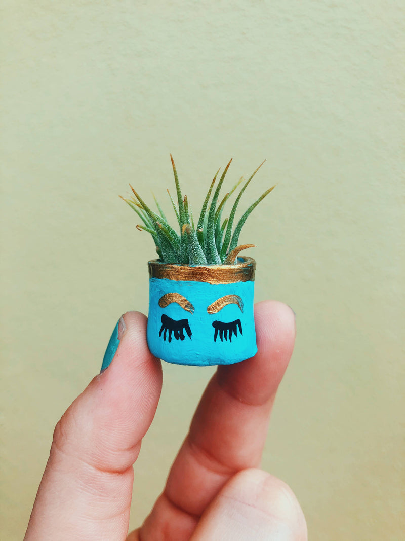 Mini Air Plant - The Holly Pot