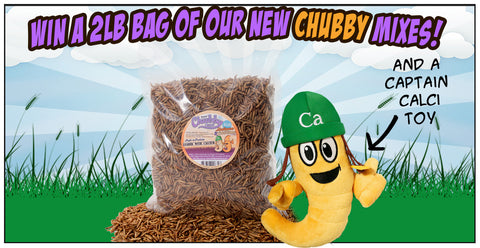 Win a 2lb bag of Chubby Mealworms Mix with Patara!