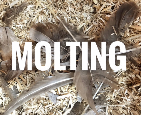 Molting - All your Questions answered