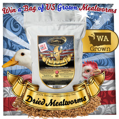 Win a Bag of US Grown Chubby Mealworms with Tilly's Nest