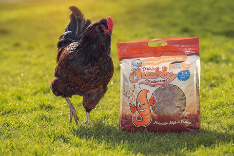 3 Reasons for Raising Chickens