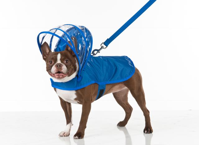 lLight Blue Dog Raincoat