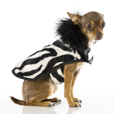 posh puppy coat - soft zebra fur