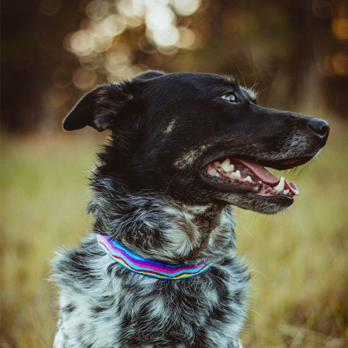 Lupine Pet Dog Collars