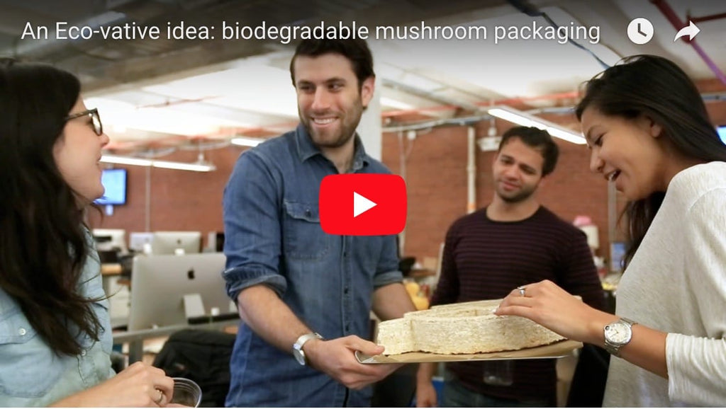 Quirky Tries Growing with Mycelium