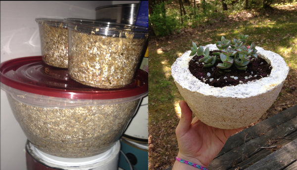 A mycelium planter grown using a tupperware as a growth form