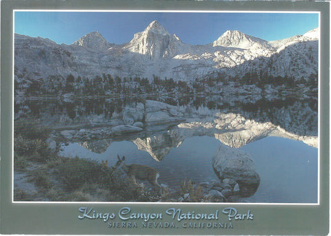 5X7 Kings Canyon Park Winter Postcard