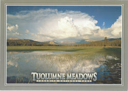 5X7 Tuolumne Meadows Postcard