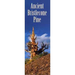 Bristlecone Pine Bookmark