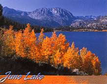 June Lake Trees Magnet