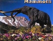 Mammoth Flowers Magnet