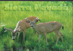Sierra Nevada Deer Postcard