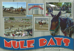 Bishop Mule Days Fair Postcard-QTY=50