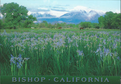 Bishop Wild Flowers Postcard-QTY=50