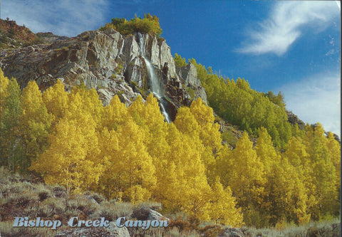 Bishop Fall Tress Postcard