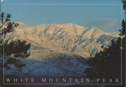 White Mountain Peak Bishop Postcard-QTY=50