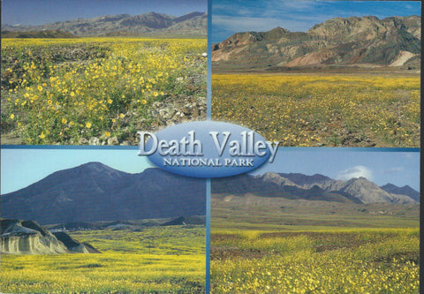 Death Valley Flowers Postcard-QTY=50