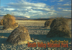 Devil's Cornfield Death Valley Postcard-QTY=50