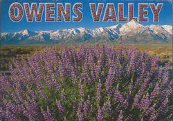Owens Valley Flowers Eastern Sierra Postcard