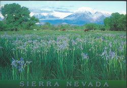 Sierra Nevada Flowers Postcard