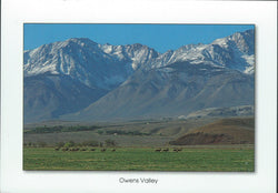 Owens Valley Wildlife Postcard