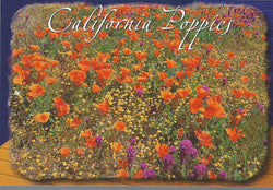 Eastern Sierra Poppies Postcard
