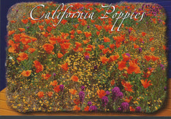 Poppies Postcard-QTY=50