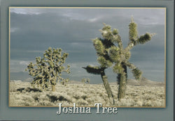 Joshua tree Postcard-QTY=50
