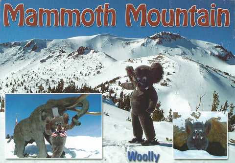 Woolly Postcard