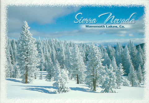 Snow Covered Evergreen Trees Postcard-QTY=50