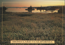 Mono Lake Field Postcard