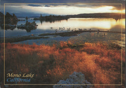 Mono Lake Brush Postcard