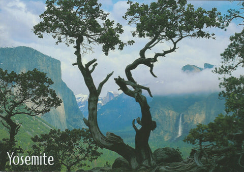 Yosemite Tree Postcard-QTY=50