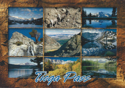 Tioga Pass Collage Postcard-QTY=50