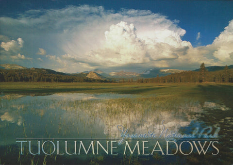 Yosemite Meadows Postcard-QTY=50