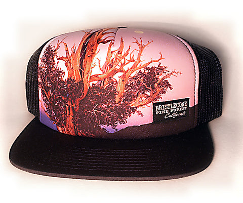 Bristlecone Photo Hat