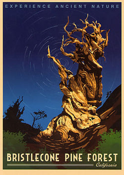 Bristlecone Pine Forest Sticker