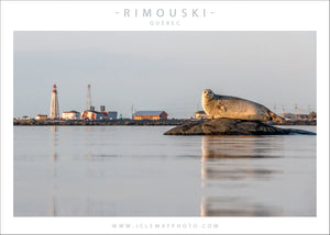 Phoque X Phare - carte postale - JC Lemay Photo - photographe rimouski