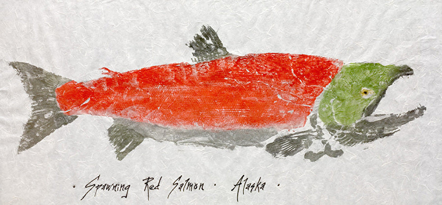 SPAWNING RED SALMON GYOTAKU