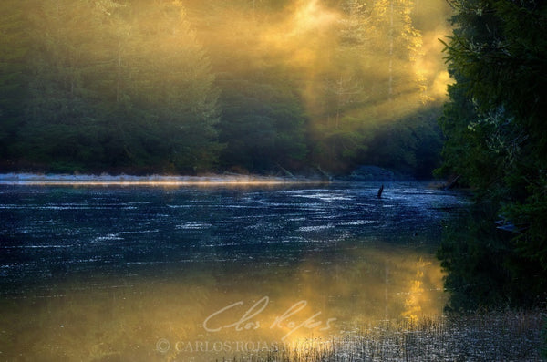 RAYS OF LIGHT AT WARD LAKE ON METAL 16X24