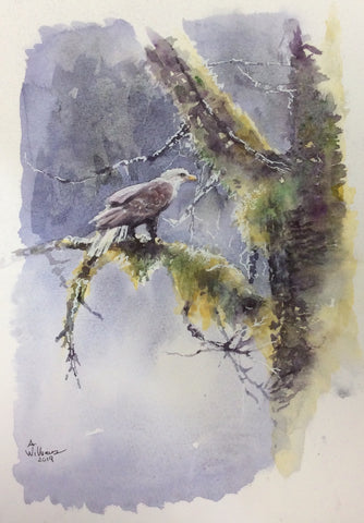 EAGLE IN TREE ORIGINAL WATERCOLOR  9X12