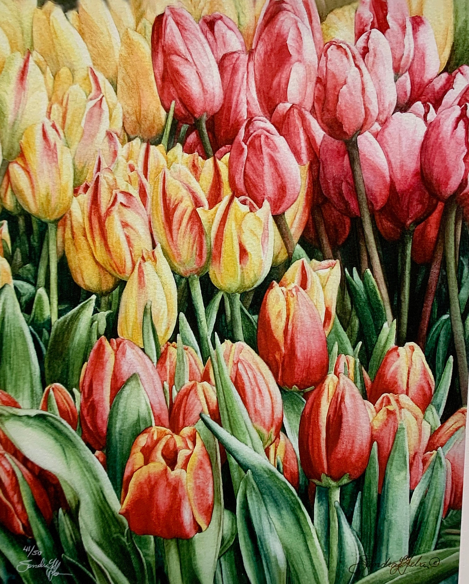 TULIPS IN WAITING