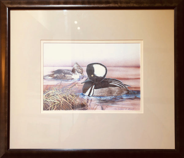 HOODED MERGANSERS FRAMED ORIGINAL DRAWING