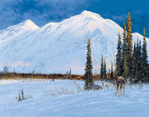 Shadowing the Trail- 2004 Iditarod Print