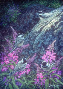 Chickadee Chat