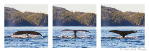 WHALE TAIL TRIPTYCH ON METAL