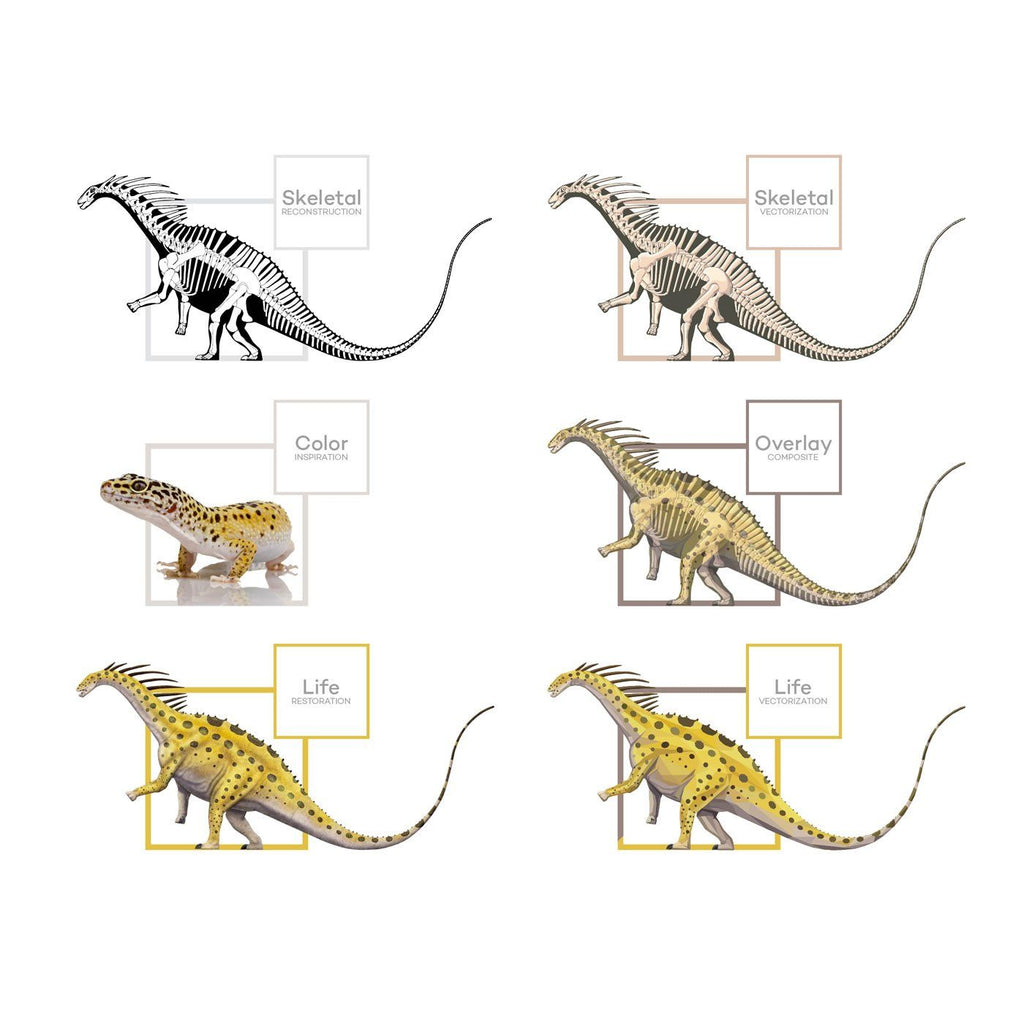 Amargasaurus Science Behind the Art Evolution Process Skeletal Life Permia