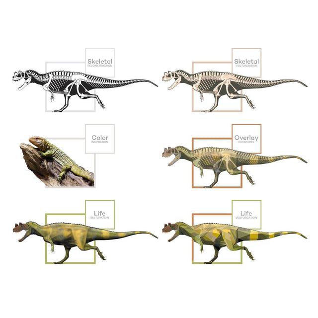 Ceratosaurus Science Behind the Art Evolution Process Skeletal Life Permia