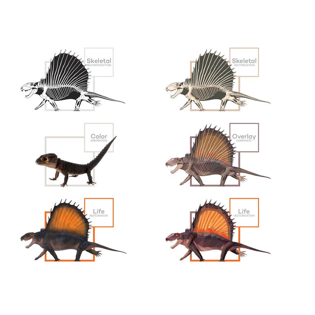 Dimetrodon Science Behind the Art Evolution Process Skeletal Life Permia